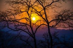 La puesta del sol con los árboles silueteados Fotos de archivo libres de regalías