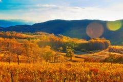 La puesta del sol de los árboles de la caída Imagenes de archivo