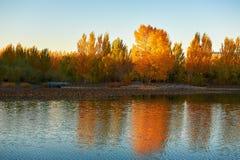La puesta del sol de los árboles del otoño Fotografía de archivo