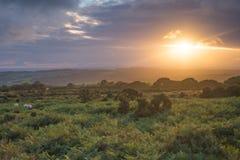 La puesta del sol de los veranos del amarra Imagen de archivo