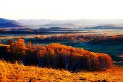 La puesta del sol de oro del prado Imágenes de archivo libres de regalías