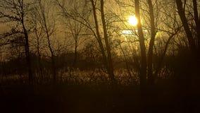 La puesta del sol de oro sobre paisaje del humedal del invierno con el árbol desnudo siluetea el reflejo en el agua Fotos de archivo libres de regalías