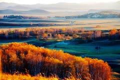 La puesta del sol del bosque del abedul blanco del otoño Foto de archivo