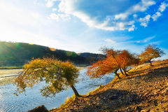 La puesta del sol del lado del río de los árboles del otoño Imagen de archivo libre de regalías