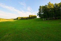 La puesta del sol del prado del verano Fotografía de archivo