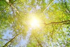 La puesta del sol del verano coloreó paisaje con las ramas de los árboles forestales que extendían a la sol en el cielo Imagen de archivo libre de regalías
