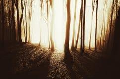 La puesta del sol en bosque encantado con niebla y el sol brillante irradia imagenes de archivo
