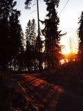 La puesta del sol en el bosque fotografía de archivo