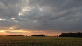 La puesta del sol en el panorama del campo de la cebada metrajes