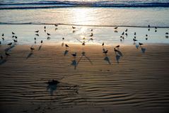 La puesta del sol en la playa Italia del lerici apretó con las gaviotas Imágenes de archivo libres de regalías
