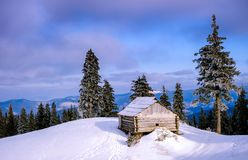 La puesta del sol en la madera entre los árboles filtra en período del invierno Fotos de archivo