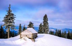 La puesta del sol en la madera entre los árboles filtra en período del invierno Fotografía de archivo