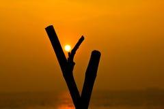 La puesta del sol es el árbol medio del diente Imagen de archivo