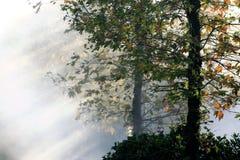 La puesta del sol está brillando en los árboles imagen de archivo libre de regalías