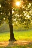 La puesta del sol irradia las hojas del canal Fotografía de archivo libre de regalías