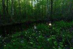 La puesta del sol reflejada en el agua del río en matorrales del bosque de la primavera no es lirios de agua florecientes Imagenes de archivo