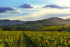 La puesta del sol se enciende sobre los viñedos y las montañas, Beaujolais, Francia Foto de archivo