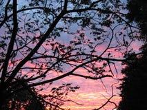 La puesta del sol se nubla árboles foto de archivo libre de regalías