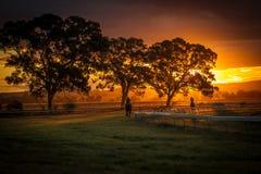 La puesta del sol siluetea caballos de raza después de la raza pasada Imagen de archivo libre de regalías