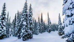 La puesta del sol sobre los árboles nevados en el paisaje del invierno del alto alpino en la estación de esquí de Sun enarbola Foto de archivo
