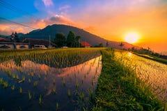 La puesta del sol sobre los campos del arroz reflejó en el agua Imagen de archivo libre de regalías