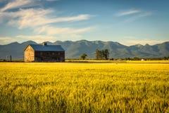 La puesta del sol del verano con un granero viejo y un centeno colocan en Montana rural imagen de archivo