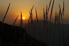La puesta del sol vista a través de la hierba Fotos de archivo
