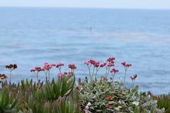 La puissance de l'océan pacifique Image libre de droits