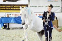 La puleggia tenditrice della donna di manifestazione in vestito blu gira su un cavallo bianco Mostra internazionale del cavallo Immagini Stock