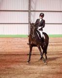 La puleggia tenditrice monta il cavallo in arena Fotografia Stock