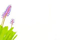 La punzada considera la flor de la diversión. Fotografía de archivo