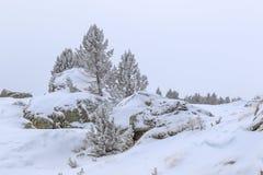 La pureza de la montaña bañada en la nieve, pinos parece candys imágenes de archivo libres de regalías