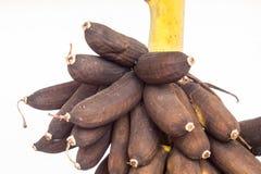 La putrefazione della banana in giardino è alimento animale fotografia stock