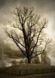 La quercia antica Immagini Stock Libere da Diritti