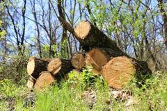 La quercia collega il prato verde Immagine Stock Libera da Diritti