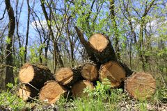 La quercia collega il prato verde Fotografia Stock Libera da Diritti