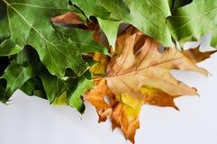 La quercia copre di foglie tappeto Fotografie Stock Libere da Diritti