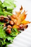 La quercia copre di foglie tappeto con le ghiande Immagini Stock Libere da Diritti