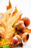 La quercia copre di foglie tappeto con le ghiande Fotografia Stock