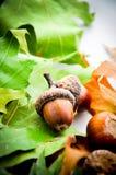 La quercia copre di foglie tappeto con le ghiande Fotografia Stock Libera da Diritti