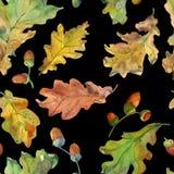 La quercia del modello di autunno lascia il nero del ob illustrazione di stock