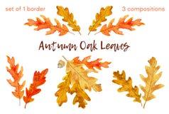 La quercia di autunno dell'acquerello lascia l'insieme 1 confine e 3 composizioni illustrazione di stock