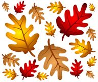 La quercia di autunno lascia la priorità bassa Fotografia Stock Libera da Diritti