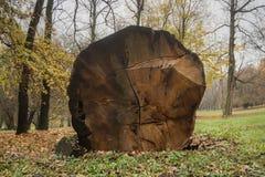 La quercia ha tagliato in un parco immagini stock