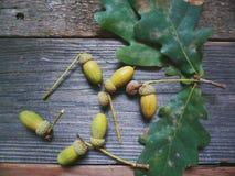 La quercia va e le ghiande si trovano sui bordi di legno Immagini Stock Libere da Diritti