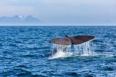 La queue de cachalot avec le jet d'eau dans l'océan Photographie stock libre de droits