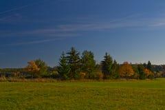 La queue de cheval de vert d'herbe de forêt de vert du feu de forêt de nature élève le ciel de champ images libres de droits