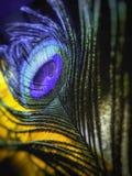 La queue de couleur du paon frais de forme illustration de vecteur