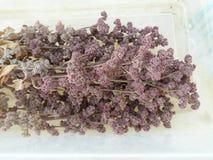 La quinoa cosechada en octubre tiene una tonalidad rojiza púrpura foto de archivo libre de regalías