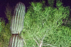La Quinta, California. Cactus at night in the desert Royalty Free Stock Image